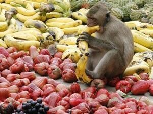 что любит обезьяна