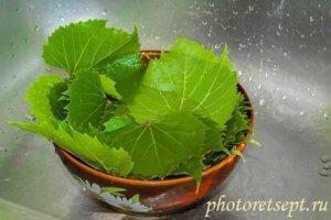 виноградные листья свежие