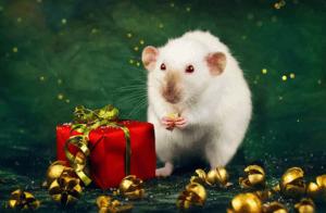 что любит новогодняя крыса