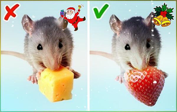 нельзя готовить год мыши крысы