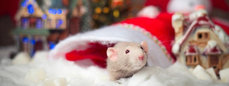новогодний стол год крысы