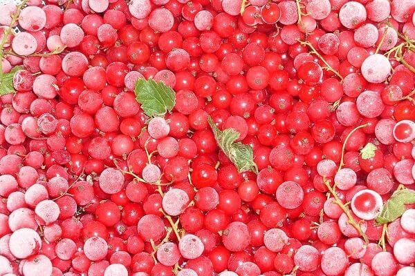 заморозка красной смородины на зиму